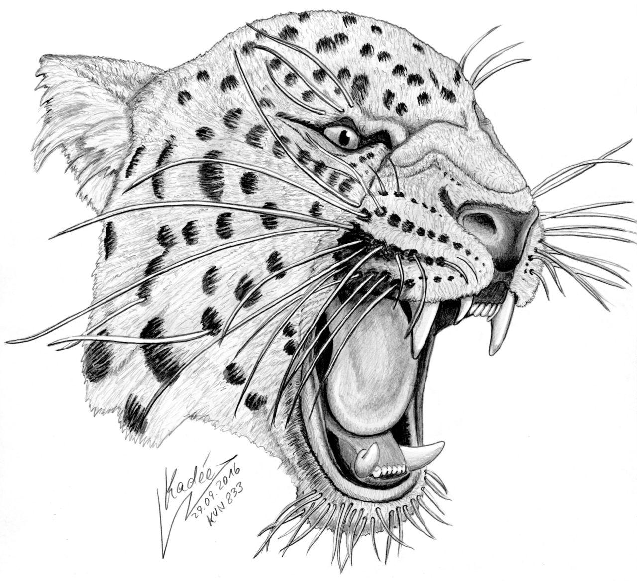 jaguar kvn 833 - illustration, tiere, zeichnung