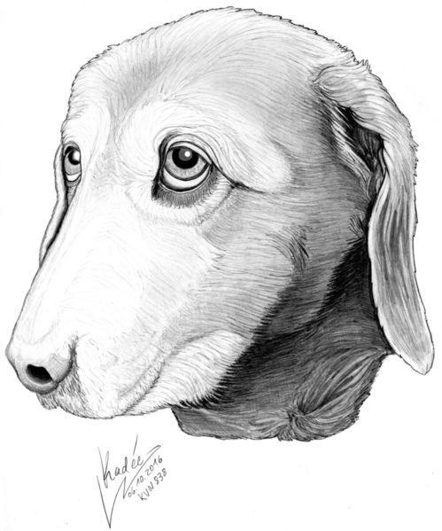 Zeichnung, Illustration, Tiere, Illustrationen, Hund