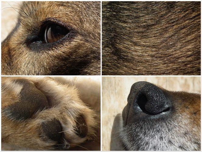 Pfote, Haare, Augen, Makro, Nase, Hund