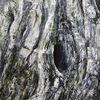 Olivenbaum, Loch, Acrylmalerei, Malerei