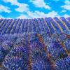 Provence, Lavendel, Lila, Malerei