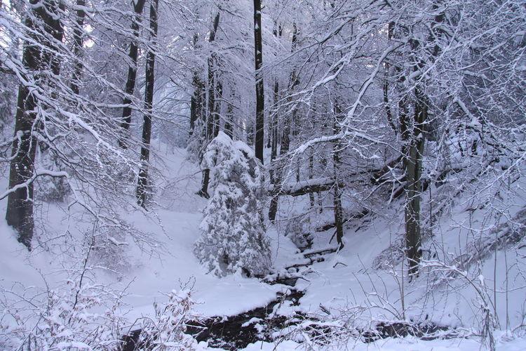 Mischwald, Osterwald, Winter, Kleiner deister, Schnee, Tanne