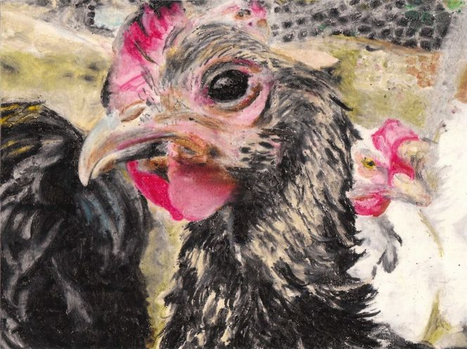 Huhn, Maran, Malerei, Tiere