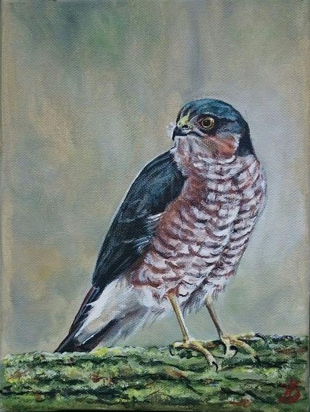 Greifvogel, Vogel, Sperber, Malerei