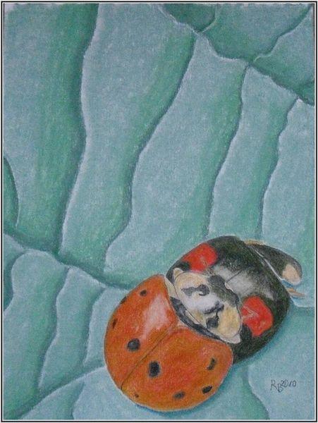 Natue, Marienkäfer, Frühling, Tiere, Zeichnungen