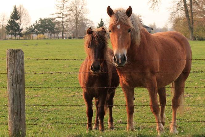 Natur, Tiere, Pony, Fotografie