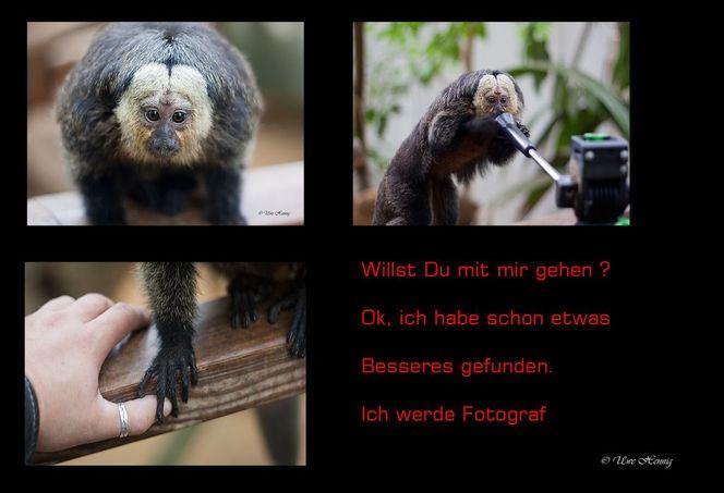 Hand, Krefeld, Stativ, Zoo, Affe, Portrait