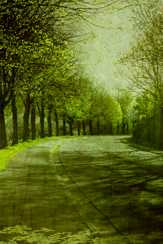 Teer, Baum, Wald, Grün, Blätter, Straße