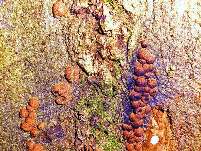 Natur, Pilze, Kunstdruck, Baum, Organisch, Makro