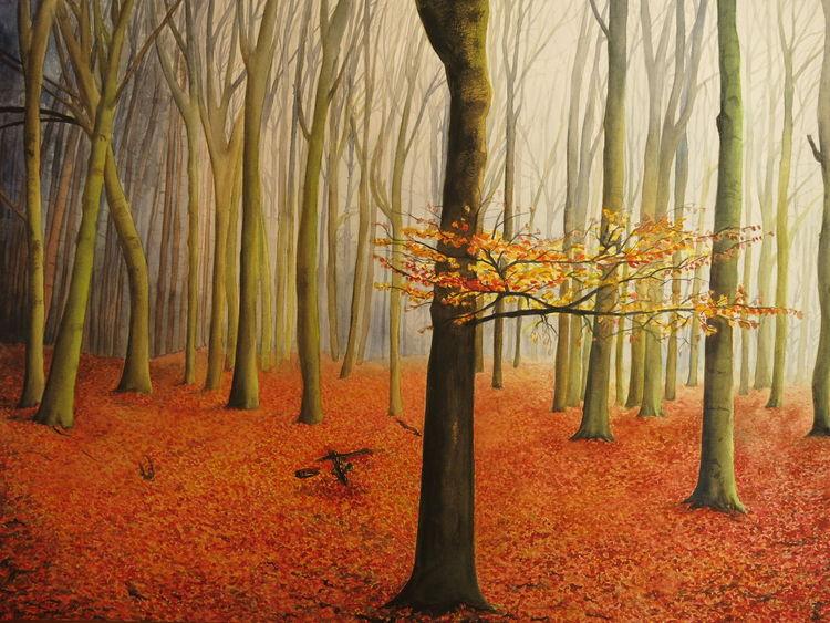 Wald, Herbst, Bunt, Orange, Rot, Herbstwald