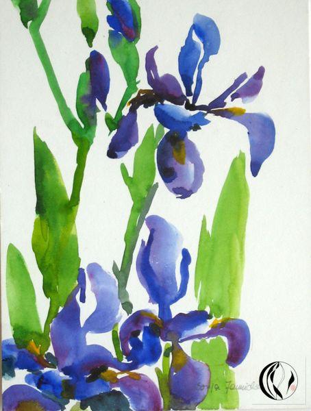 Aquarellmalerei, Iris, Blumen, Malerei, Pflanzen, Blau