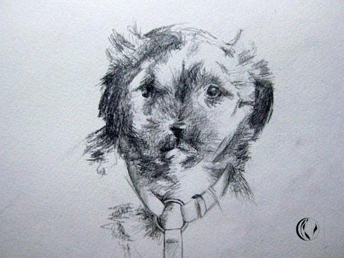 Hund, Jette, Bleistiftzeichnung, Malerei, Tiere, Havaneser