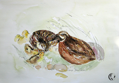 Vogel, Aquarellmalerei, Wachteln, Malerei, Tiere
