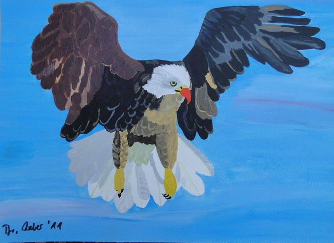 Weißkopfseeadler, Vogel, Adler, Alaska, Wahrzeichen, Arktis