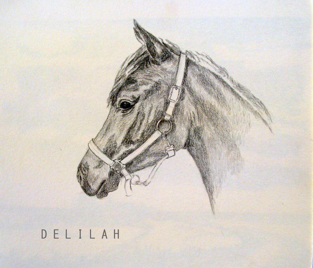 Junge av stute araber stute pferdeportrait skizze for Sofa von der seite