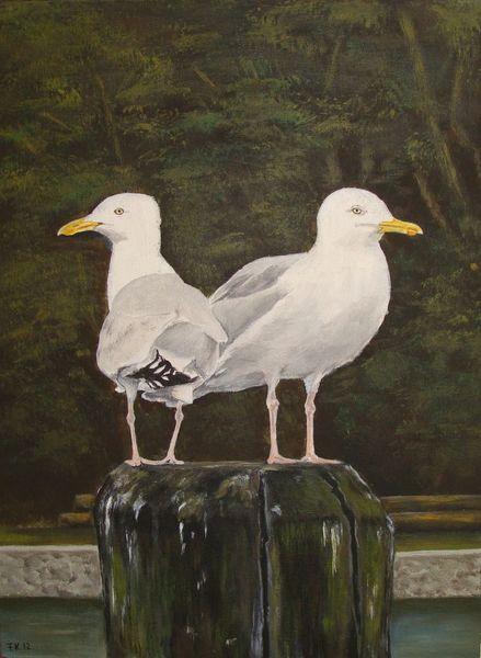 Natur, Vogel, Acrylmalerei, Tiere, Möwe, Hafen