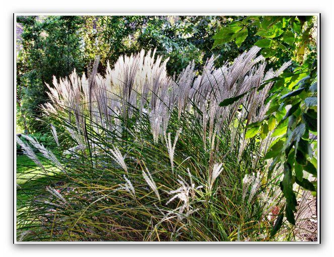 Bambusgras, Landschaft, Garten, Fotografie
