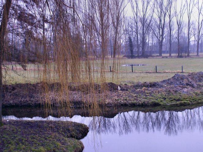 Wasser, Landschaft, Natur, Bach, Baum, Fotografie