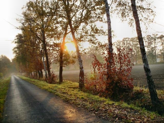 Feldweg, Herbstmorgen, Fotografie
