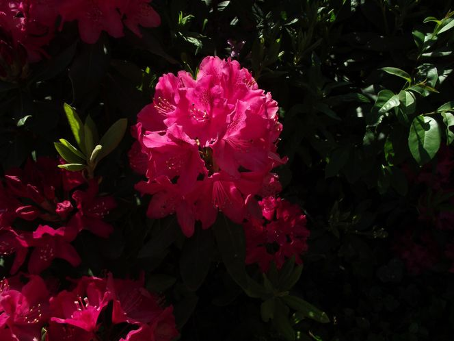 Blume park, Sommer, Sonne, Fotografie