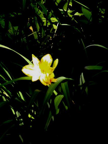 Blumen, Lilie, Teich, Fotografie