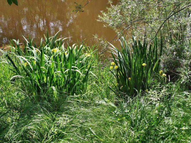 Angler teich, Wasserlilie, Fotografie
