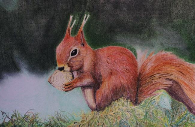 eichhörnchen - tierportrait, wald, nüsse, eichhörnchen von