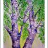 Birken, Frisch, Baum, Frühlingsgrün