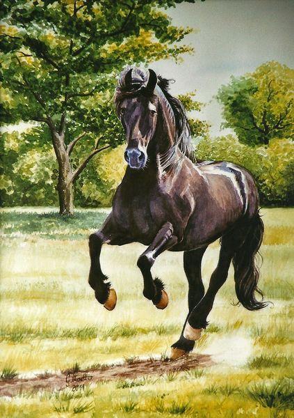 Reiten, Wiese, Aquarellwelt, Pferdemaler, Temperament, Freiheit