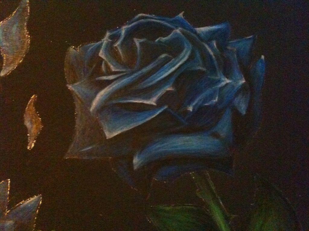 bild blaue rose schwarzer hintergrund rose blumen von. Black Bedroom Furniture Sets. Home Design Ideas