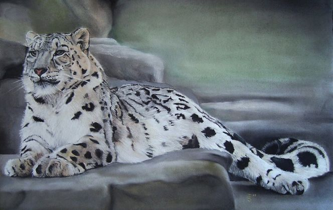 Pastellmalerei, Leopard, Wild, Katze, Schneeleopard, Tiermalerei
