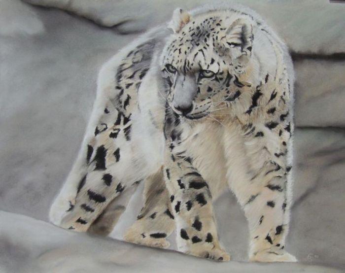 schneeleopard katze tiere gro katze tierportrait von erhard s nder bei kunstnet. Black Bedroom Furniture Sets. Home Design Ideas