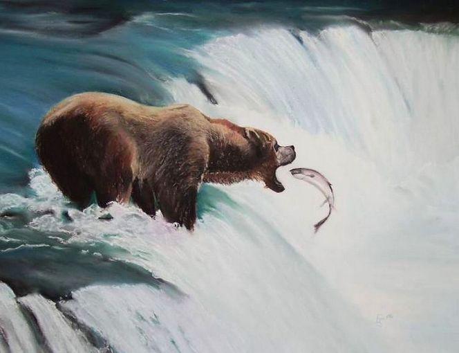 Lachs, Tiermalerei, Lachsfänger, Kanada, Tierportrait, Tierwelt