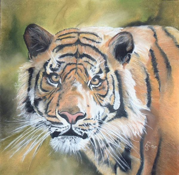 Großkatze, Pastellmalerei, Wild, Tiermalerei, Katze, Tierportrait