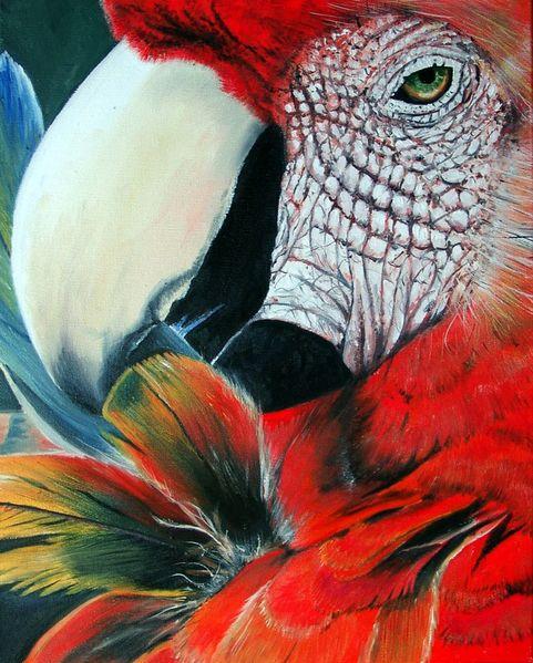 Ölmalerei, Vogel, Tiere, Schnabel, Papagei, Malerei