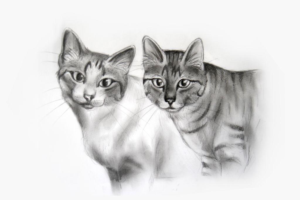 Bleistiftzeichnung Katze Zeichnung - 112 Bilder und Ideen - zeichnen ...
