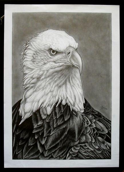 Bleistiftzeichnung, Natur, Zeichnung, Tiere, Wildtierzeichnung, Adler