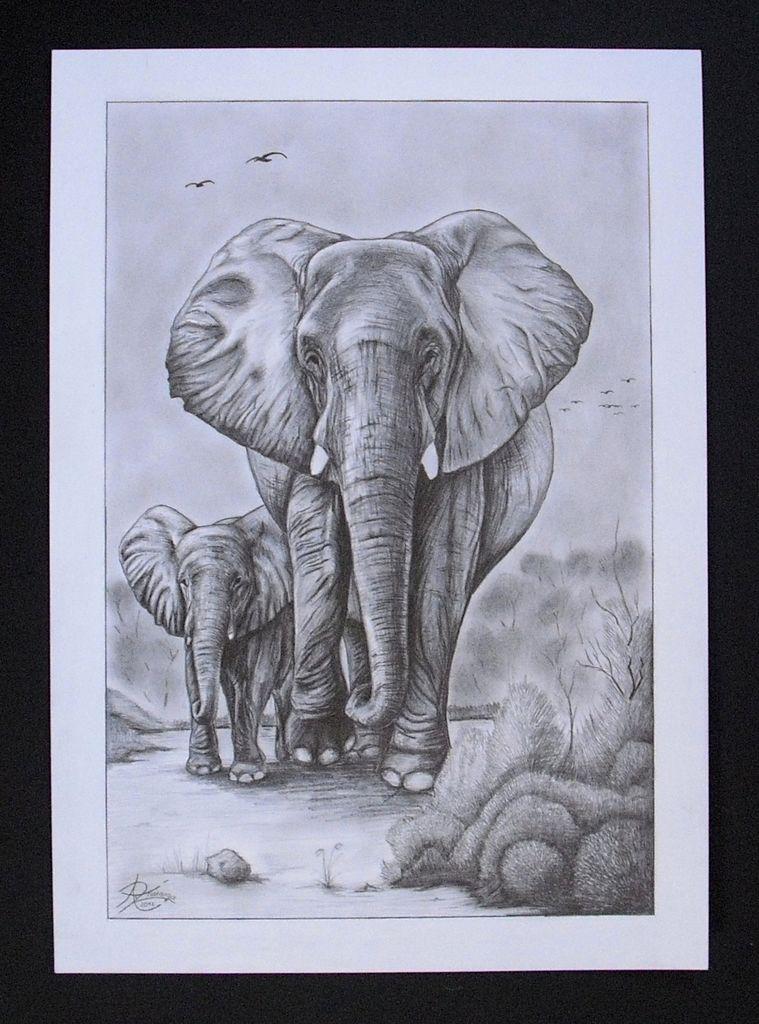 bild baby elefant bleistiftzeichnung portrait. Black Bedroom Furniture Sets. Home Design Ideas