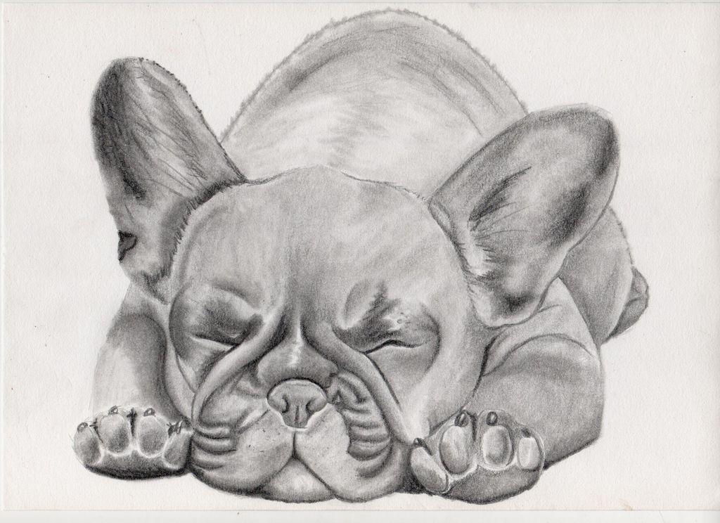 bild welpe tier bulldogge malerei von thalyndra bei kunstnet. Black Bedroom Furniture Sets. Home Design Ideas