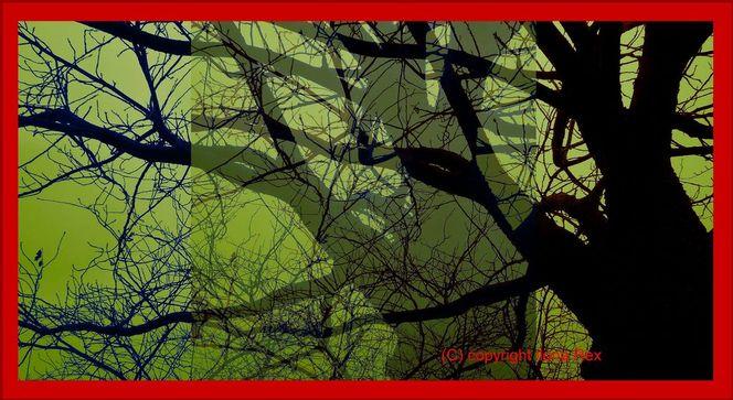 Grün, Rot schwarz, Farbwirkung, Baum, Wald, Blau