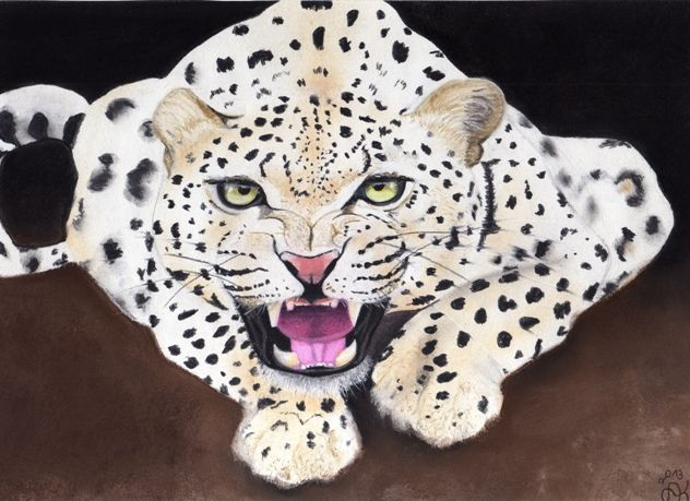 Natur, Leopard, Tiere, Katze, Raubtier, Zeichnungen