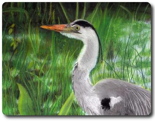 Grün, Natur, Vogel, Fluss, Schilf, Malerei