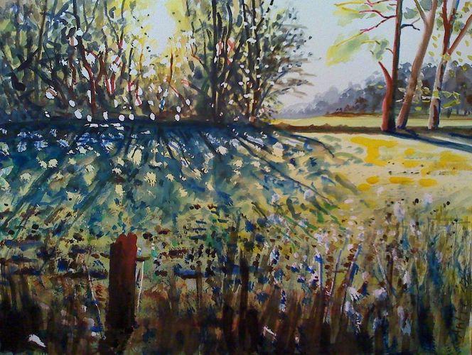 Weide, Licht, Natur, Wiese, Sonne, Landschaft