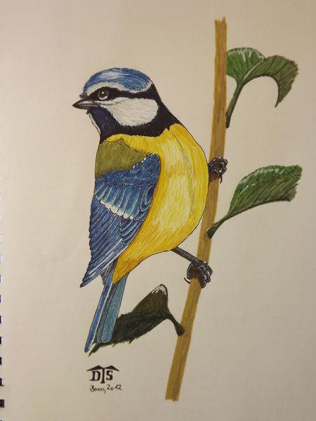 Meise, Vogel, Blaumeise, Blue tit, Singvogel, Zeichnungen
