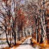 Baum, Landschaft, Winterlandschaft, Weg