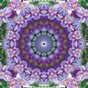 Fotografie, Mandala, Digitaldruck, Clematis