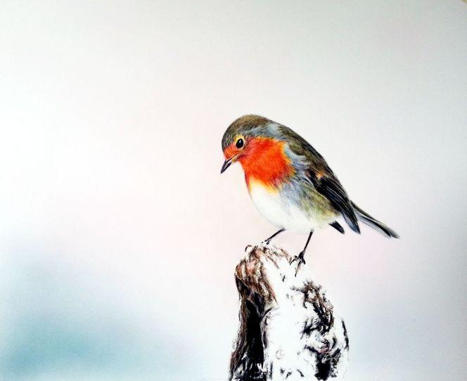 Rotkehlchen, Malerei, Tiere, Zeichnung, Winter
