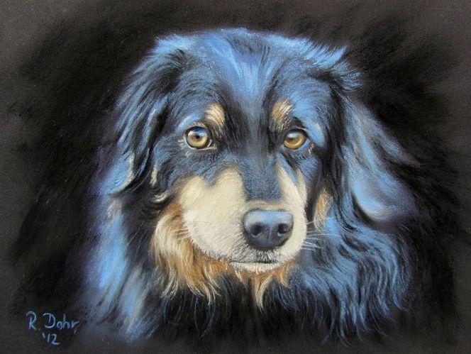 Blick, Portrait, Tiere, Augen, Hund, Malerei