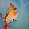 Kardinal, Tiere, Vogel, Tiermalerei