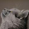 Pastellmalerei, Realismus, Gegenständlich, Katze